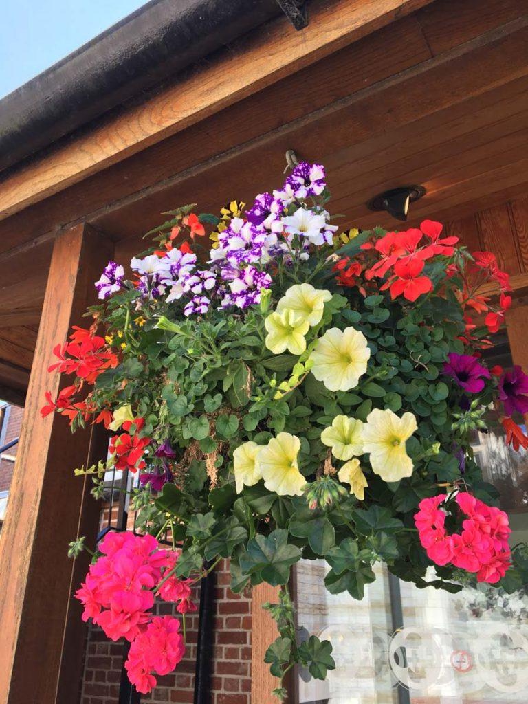 6月のヨーロッパは花盛り La Vida Linda 輸入商材 輸入ペット雑貨 世界のイイものを日本へ2