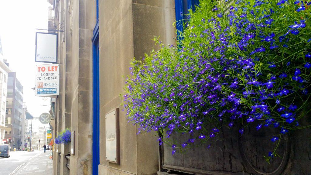 ロンドン 街の紫の小花