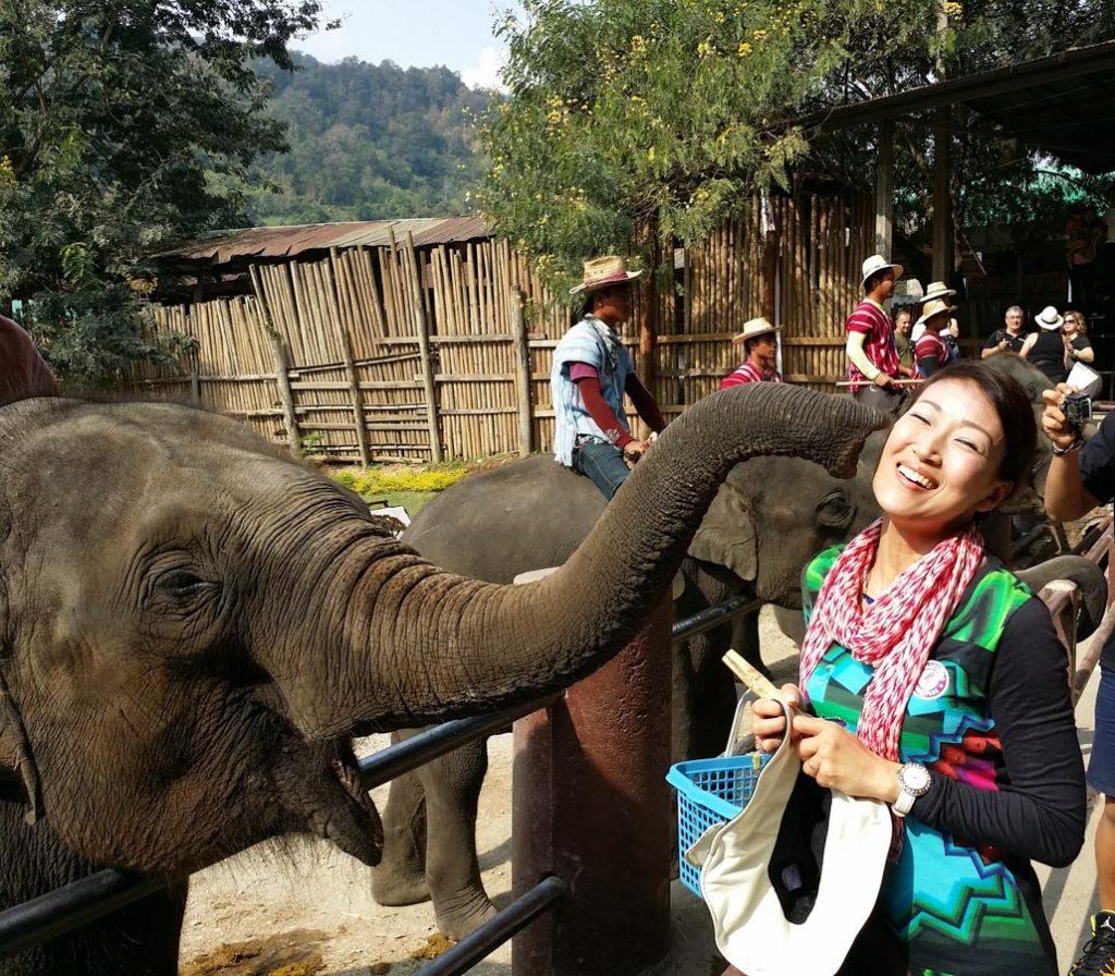 ゾウが鼻でキス タイ チェンマイ